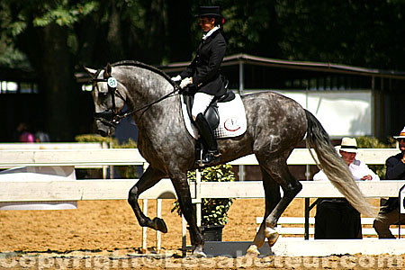 Rencontres equestres méditerranéennes 2013
