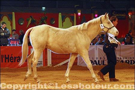 Concours de chevaux de couleur poulains salon du cheval de montpellier - Salon du cheval montpellier ...