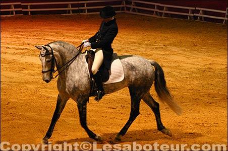 Photos concours de dressage salon du cheval de montpellier - Salon du cheval montpellier ...