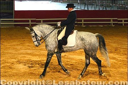 photos concours de dressage salon du cheval de montpellier