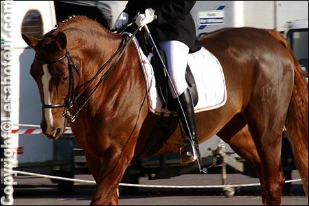 Photos du salon du cheval de montpellier dressage paddock d 39 echauffement - Salon du cheval montpellier ...