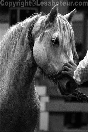 Photos de chevaux noir et blanc salon du cheval de montpellier 2004 - Salon du cheval montpellier ...